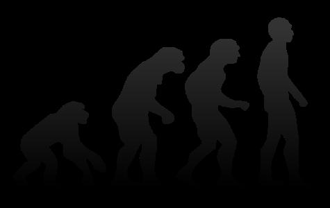 Homo Sapiens Had a Smarter Cousin