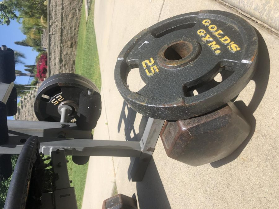 Weights+that+can+be+used+for+working+out+during+the+lock+down.